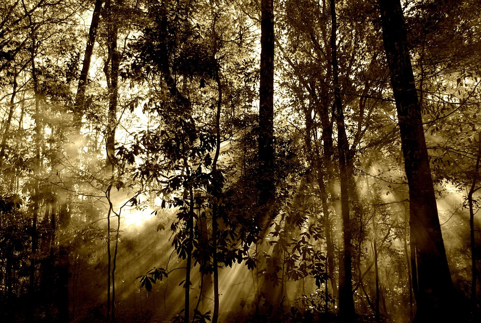 forest-67286_960_720