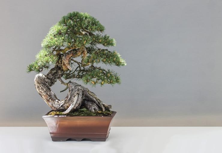 bonsai-1805501_960_720