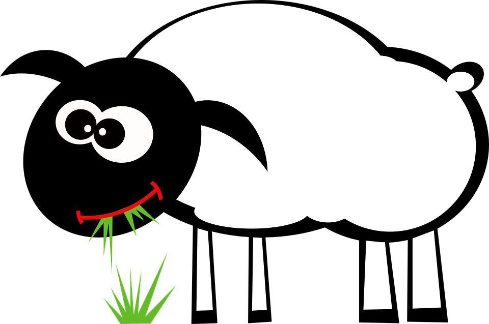 sheep-161389_960_720